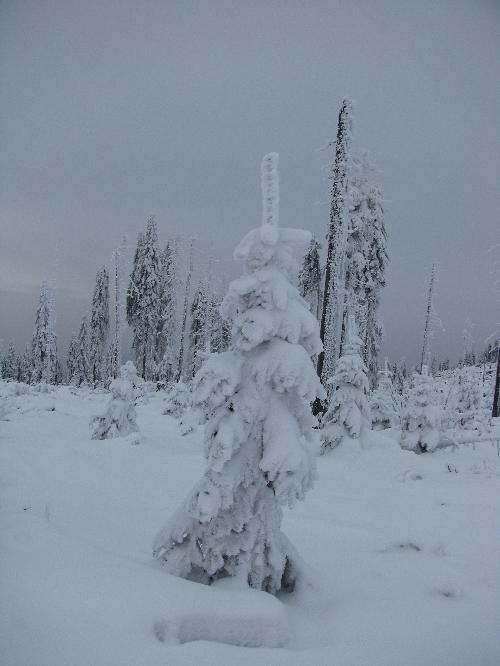 Schneeschuhwandern am Dreisessel, Bayerischer Wald